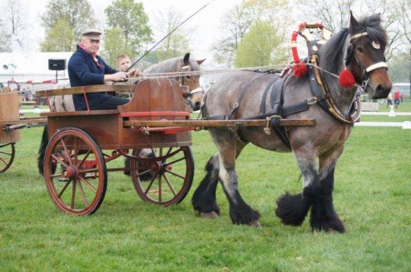mari_paard_6internationaal_menwedstrijd_horst_29-4-2012_(2)_l